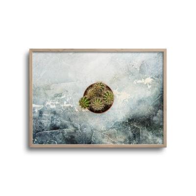 kaktusblost flatlay plakat med rustik baggrund