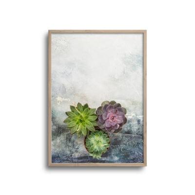kaktusbloster flatlay plakat med rustik baggrund